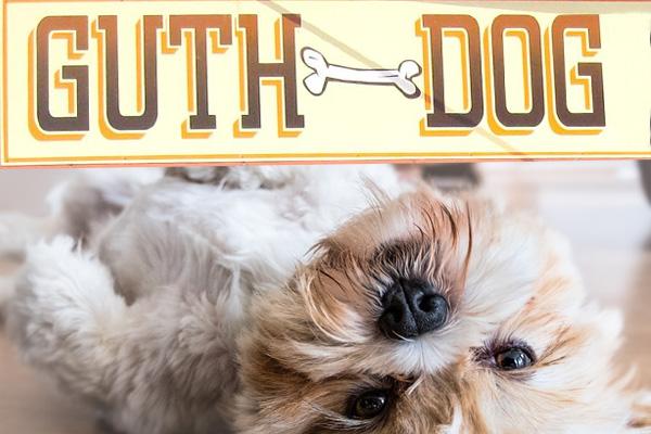 Guth Dog